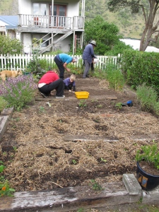 Ocean Square's community garden takes shape.